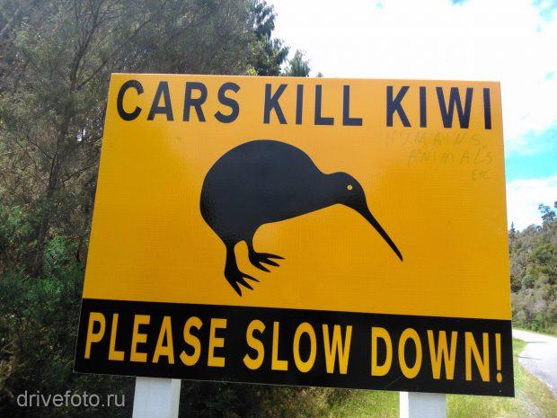 <strong>Машины убивают киви и надпись от руки: и людей, и животных.</strong>