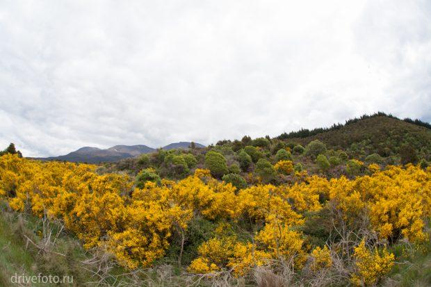 <strong>Не туристическая долина, точнее ущелье Wanganui.</strong>
