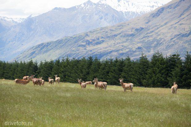 <strong>Фермы с оленями – килограмм оленины от 30 дол.</strong>
