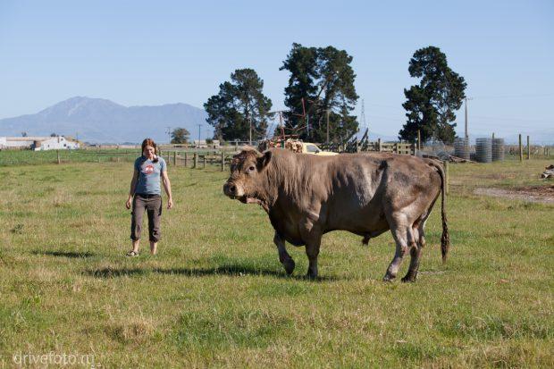<strong>У дедушки на ферме. Фото-1.</strong>