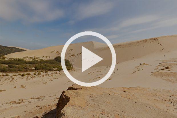 <strong>Песчаные дюны Te Paki</strong>