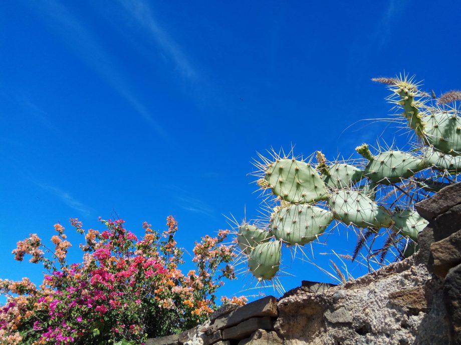 Кактусы разных видов и цветущие кустарники повсюду