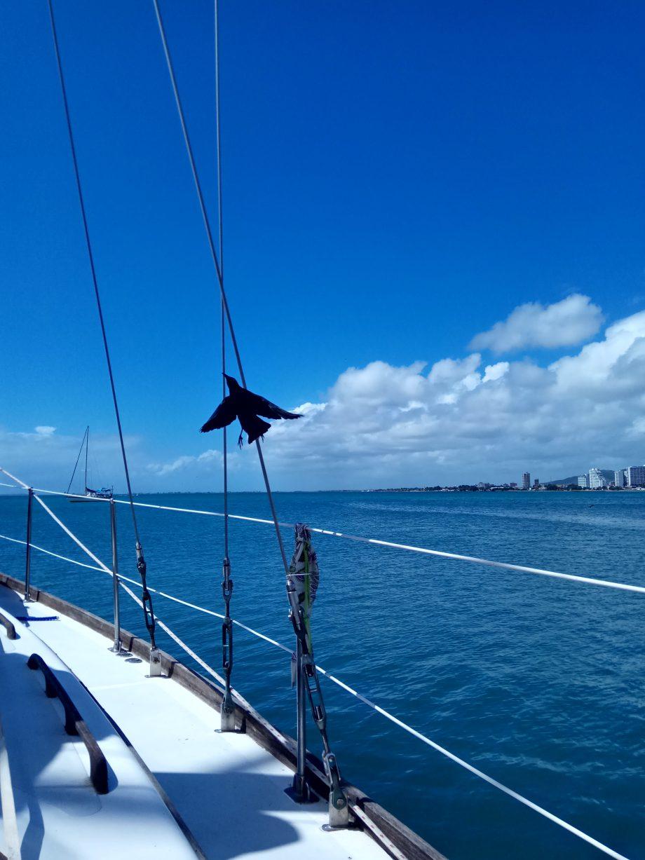 Смелые птички залетали и внутрь лодки в поисках еды