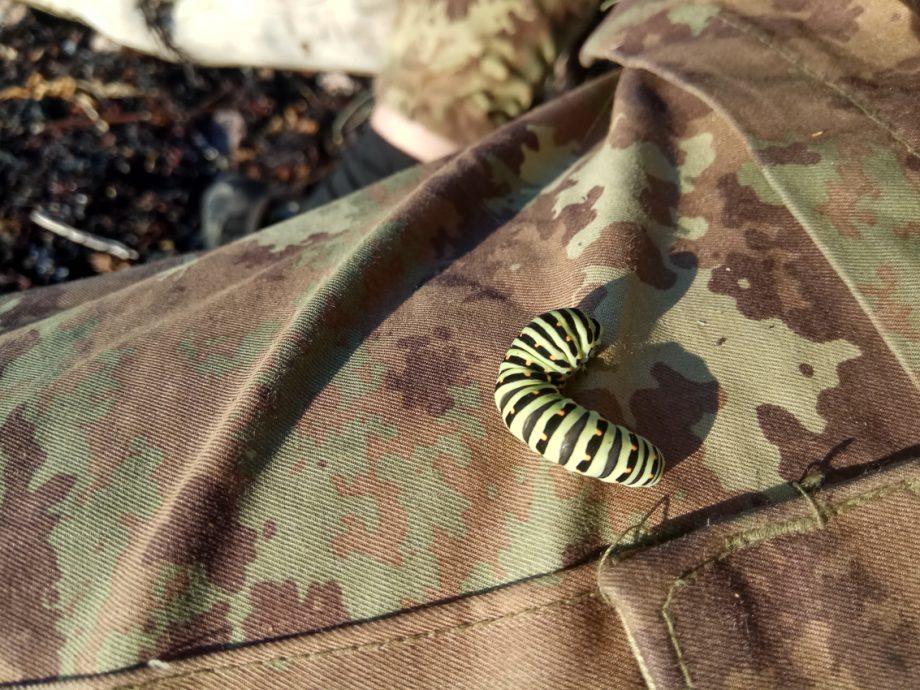 Натовский камуфляж и поморская гусеница