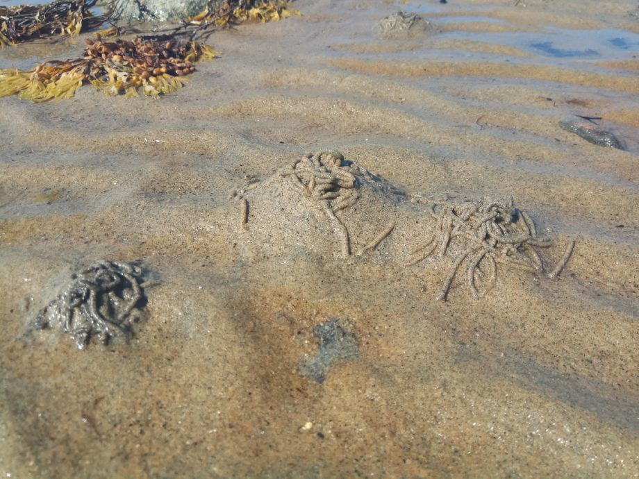 Норки пескожилов